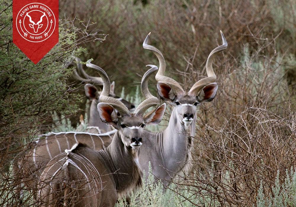 Aru Game Lodges - kudu